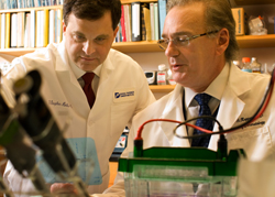 two male researchers discussing at a research bench
